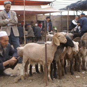 Kashgar - 喀什