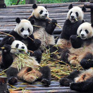Chengdu - 成都